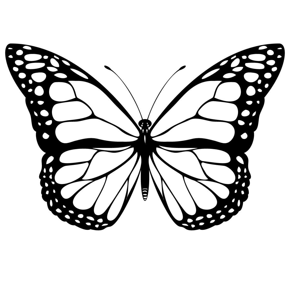 Butterfly-Tracing