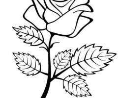 Rose Tracing Pattern