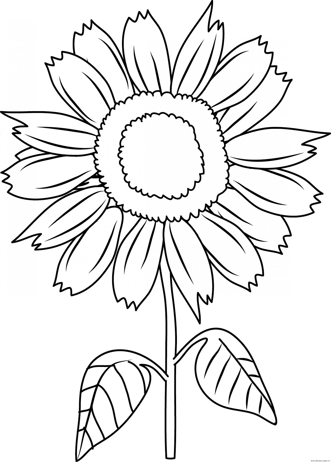 Outline-Drawing