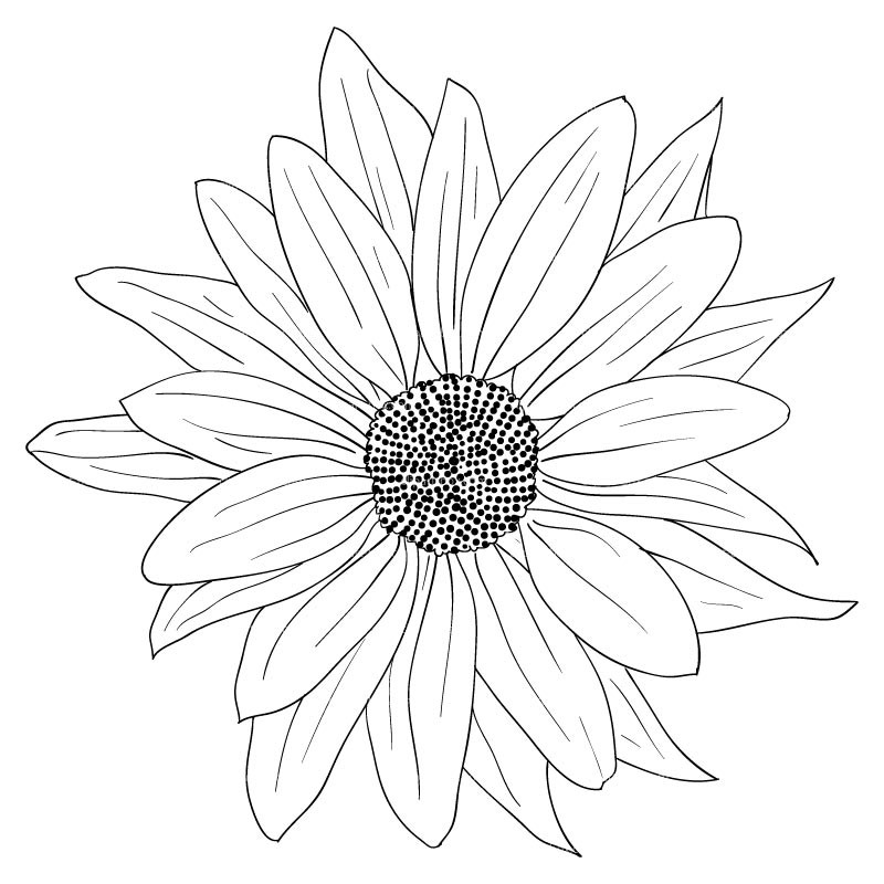 Sunflower-Drawing-Black-And-White