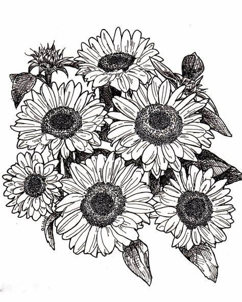Sunflower-Outline-Drawing-Ideas