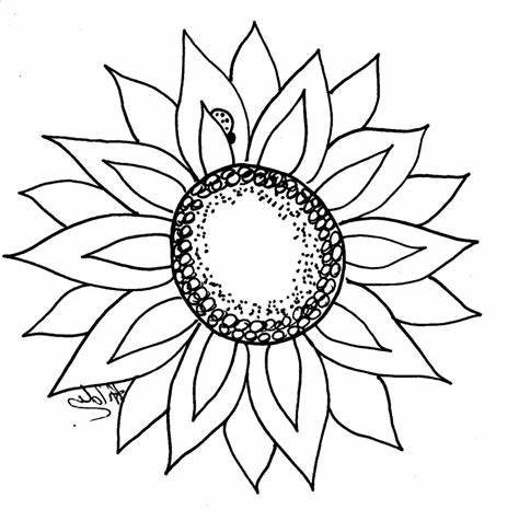 Sunflower-Outline-Drawing-Printable