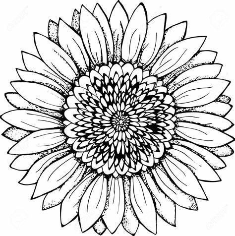 Sunflower-Outline-Drawing